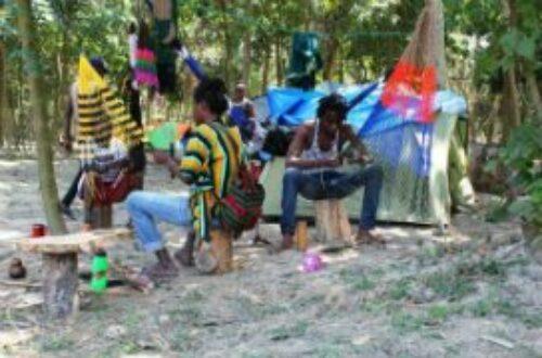 Article : Bahimba festival, l'ile Lunkulu métamorphosée