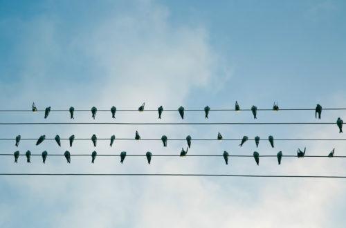 Article : La Symphonie des Oiseaux, quand la musique se sent pousser des ailes