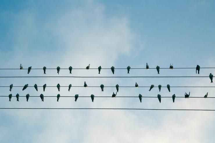 oiseaux-fil-electrique-ciel