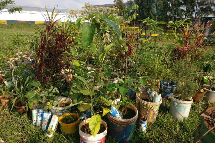 arbres-jardin-plantes