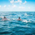 politique-africaine-meilleure-place-dauphin-derriere-requin