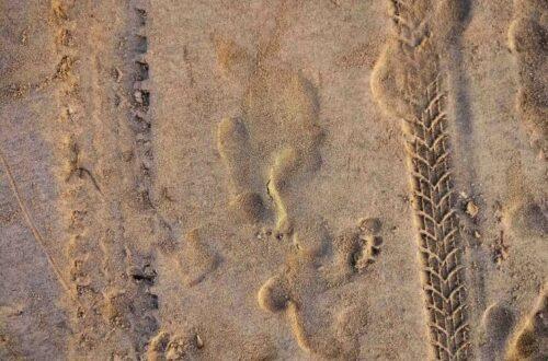 Article : Des traces sur la plage révèlent qu'une chose terrible est en train de se passer