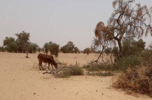 Article : Une grave crise alimentaire menace le monde rural, face à un ciel aride et des terres desséchées