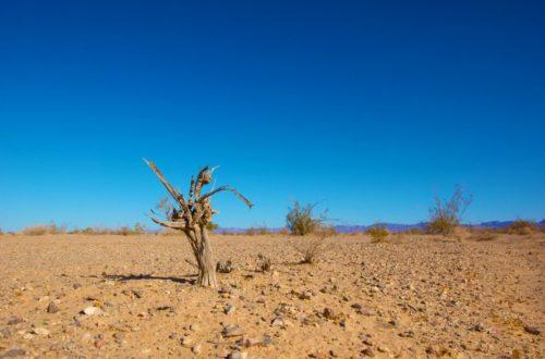 Article : L'humanité se dirige-t-elle vers le précipice ?