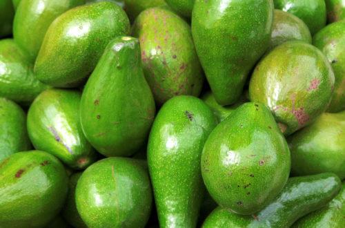 Article : L'avocat : l'aliment savoureux de l'été haïtien