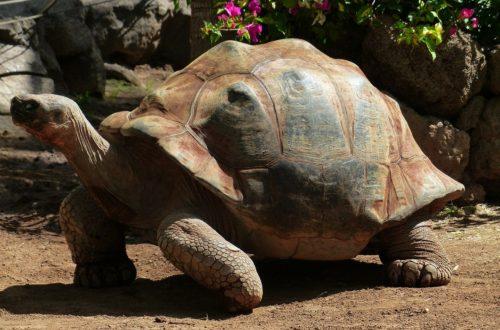 Article : Bamba Samory Soueidat, l'amoureux protecteur des tortues terrestres