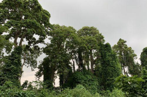 Article : Notre planète bleue souffre, sauvons la !