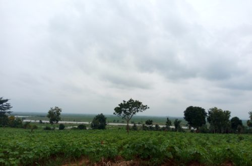 Article : Covid-19 au Tchad: les agriculteurs s'inquiètent  pour l'année prochaine