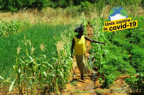 Article : Comment le monde agricole burkinabè se tourne vers l'agroécologie après le Covid-19