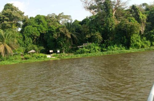 Article : Écotourisme : À la découverte du parc national d'Azagny, en Côte d'Ivoire