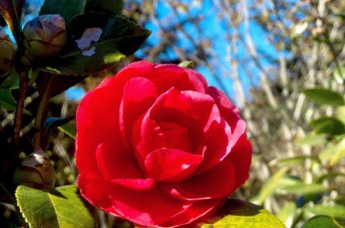 Article : Le bonheur de photographier les fleurs