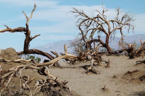 Article : Le destin de l'Homme, la conscience de notre propre mortalité