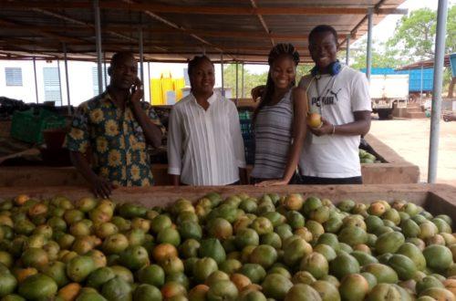 Article : Burkina Faso : les cultures fruitières menacées par le changement climatique
