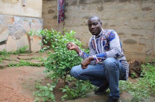 Article : Journée de l'arbre : joyeux anniversaire à mon citronnier