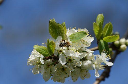 Article : Forçage génétique sur les insectes : vers un dérèglement de la biodiversité ?