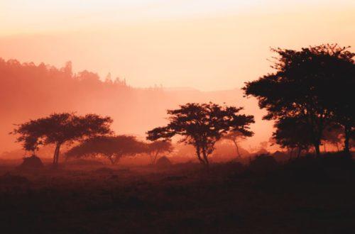 Article : L'environnement naturel, victime collatérale  des conflits armés