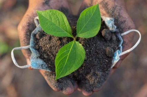 Article : World Environment Day : restaurer des écosystèmes en décadence