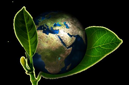 Article : Les jeunes camerounais s'engagent pour la protection de l'environnement