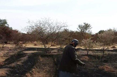 Article : La forêt de Yacouba Sawadogo, prix Nobel alternatif, ravagée par les flammes