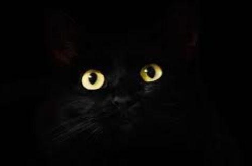 Article : Le chat noir est un viol