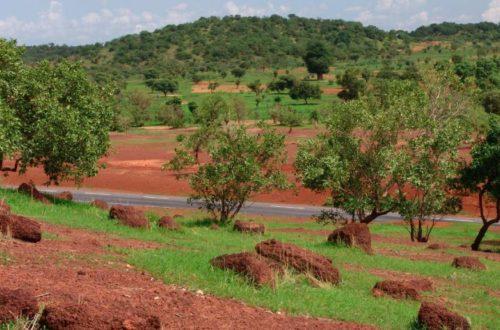 Article : Désertification au Mali : Comment concilier reboisement et déboisement?